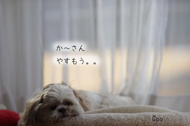 03-23_7278.jpg