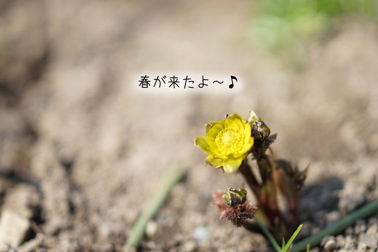 03-31_7419.jpg