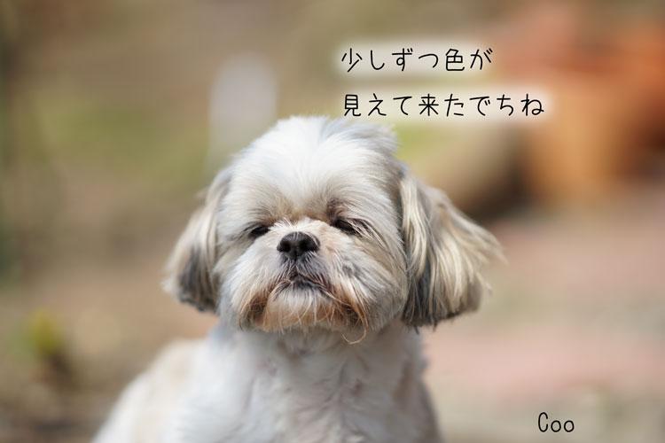 03-31_7420.jpg