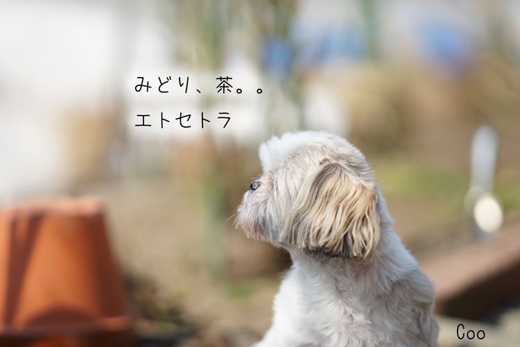 03-31_7421.jpg