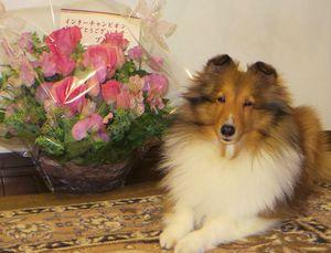 blogお花