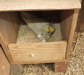 B-nest2.jpg