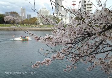 桜さんぽ7