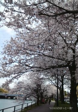 桜さんぽ9