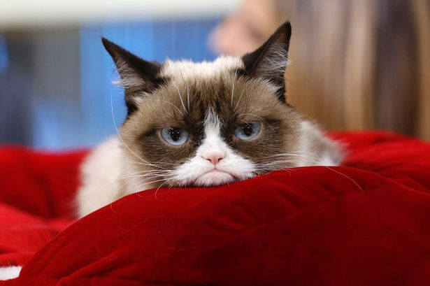 Grumpy-Cat-1.jpg