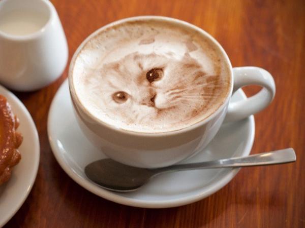 cat_latte_1.jpg