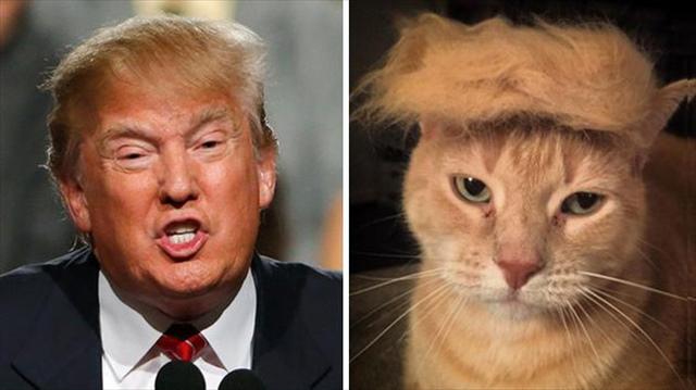donald-trump-funny-look-alike-7__700_R.jpg