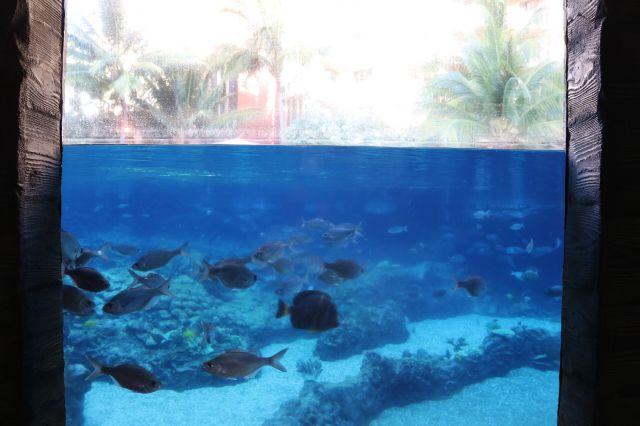 海水プール(1)