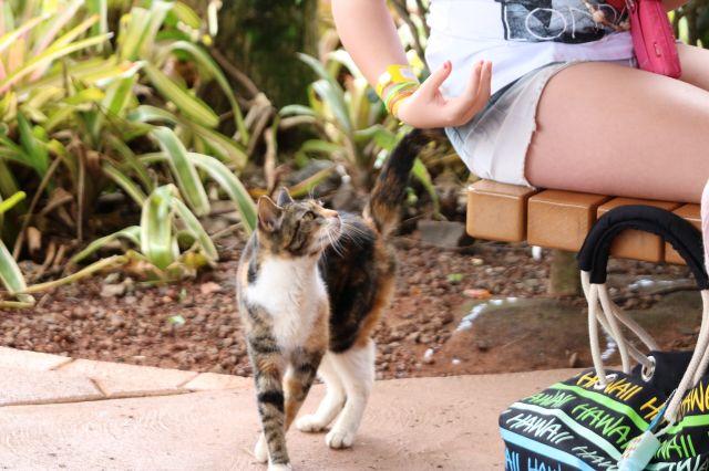 猫3(1)