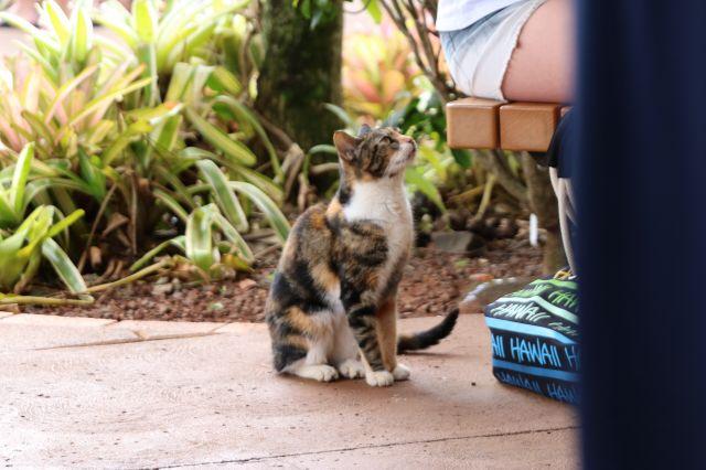 猫4(1)