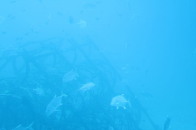 水中(1)