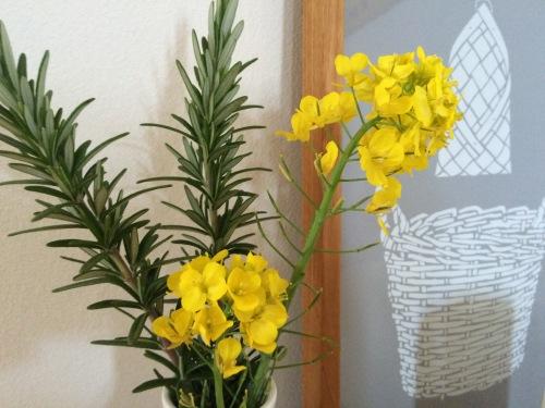 オマジオ 菜の花