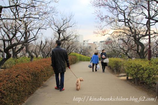 160307 Hanegi park 7