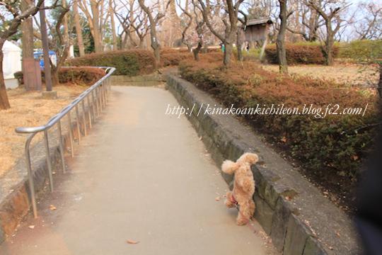 160307 Hanegi park 6