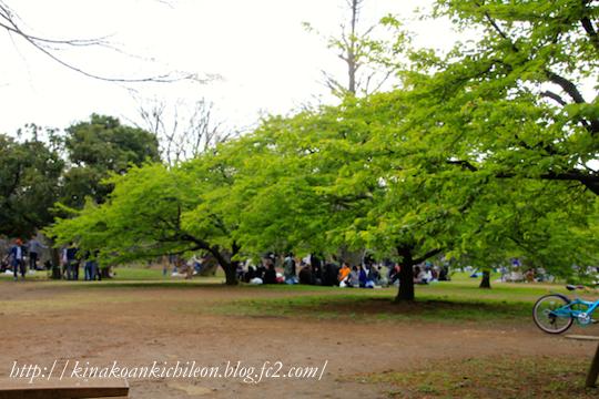 160320 Yoyogi park 7