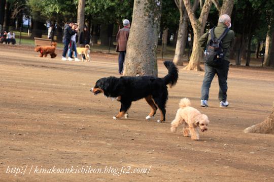 160320 Yoyogi park 11