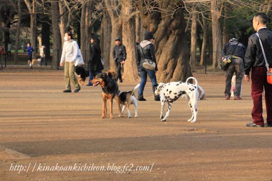 160320 Yoyogi park 15