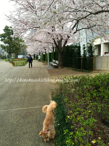 160402 Tokyo midtown 4