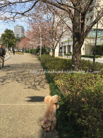 160402 Tokyo midtown 8