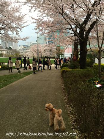 160402 Tokyo midtown 6
