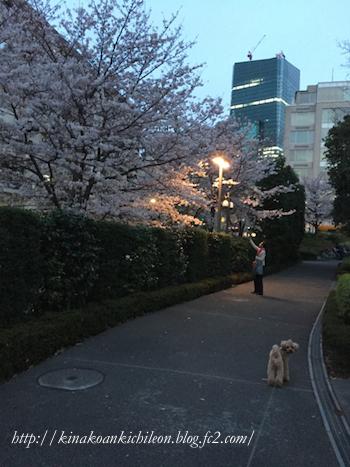 160402 Tokyo midtown 10