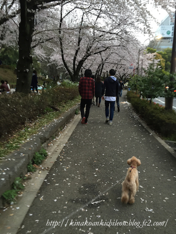 160404 Shiba park 2