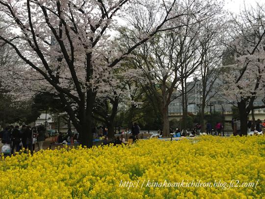 160404 Shiba park 3