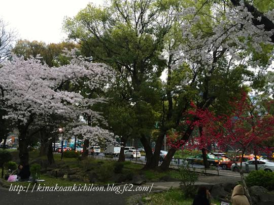 160404 Shiba park 5