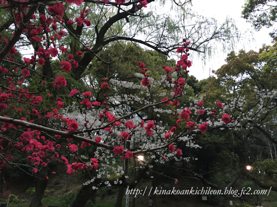 160404 Shiba park 6