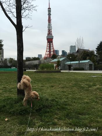 160404 Shiba park 8