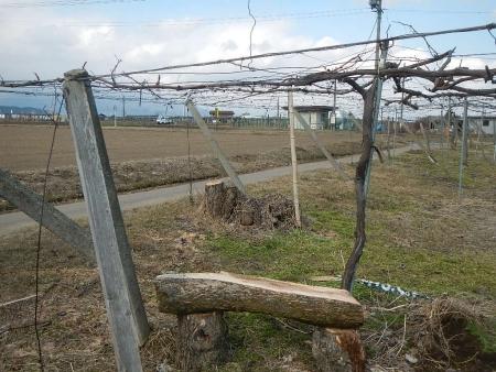 果樹の伐採と剪定 (6)