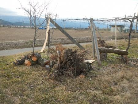 果樹の伐採と剪定 (10)