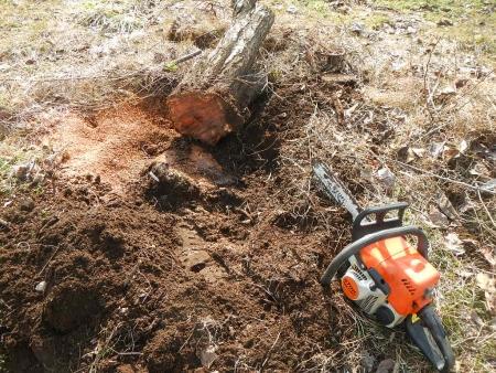 果樹の伐採と剪定 (3)