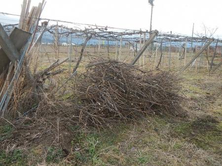 果樹の伐採と剪定 (14)