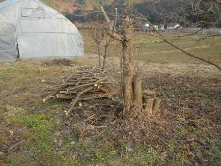 果樹の伐採と剪定 (12)