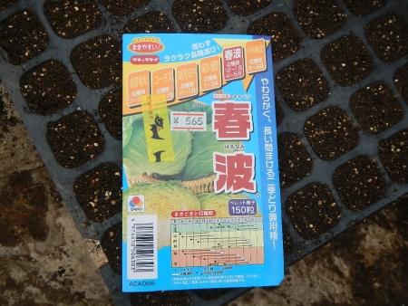 キャベツ種まき (5)