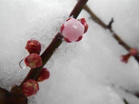 雪の華 (5)