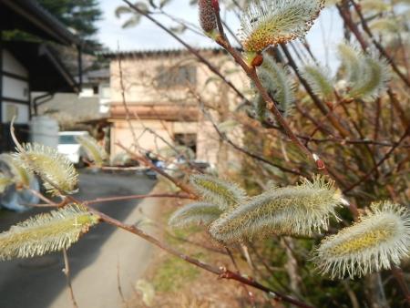 春の花 (1)