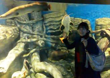 水族館 水槽