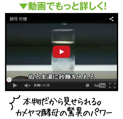 カメヤマ酵母 動画