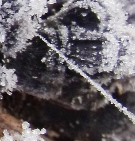 20160113 初氷 018-4
