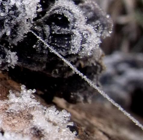 20160113 初氷 018-3