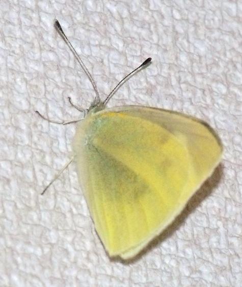 201603021蝶と発電 030-2