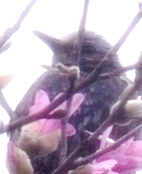 201603013 犯人・犯鳥 148-2
