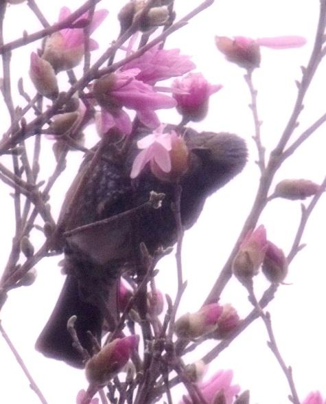201603013 犯人・犯鳥 035-2