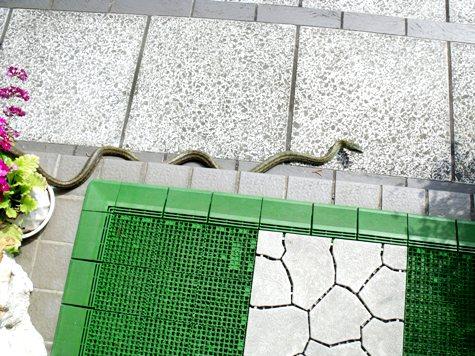 20160401 冬眠ざめの蛇 001-2
