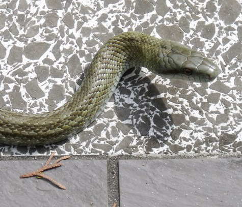 20160401 冬眠ざめの蛇 002-3