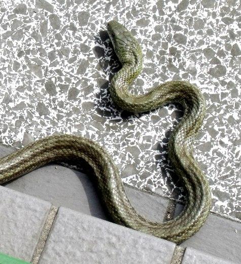 20160401 冬眠ざめの蛇 003-3