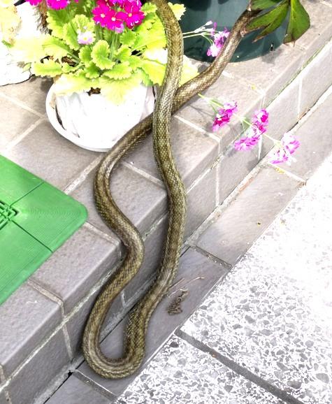 20160401 冬眠ざめの蛇 004-2
