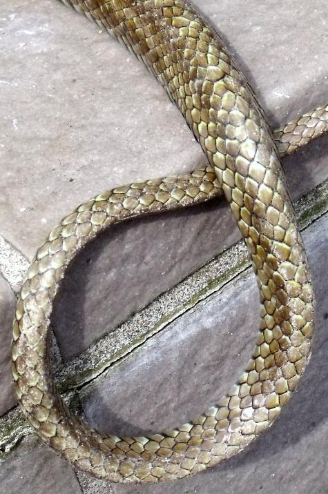 20160401 冬眠ざめの蛇 006-4